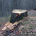 Криминал: Работники лесхоза незаконно разрешили вырубку леса в Житомирской области