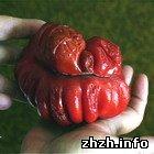 Мешканка Житомирської області виростила помідор у формі серця. ФОТО