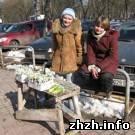 В Житомире началась торговля подснежниками. Экологи советуют не покупать первоцветы