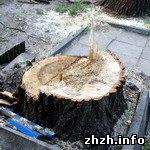 Житомир: В одном из скверов Житомира срезали 42 дерева. ФОТО