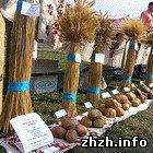 Экономика: В Житомире на стадионе агротехнического колледжа состоится праздник урожая
