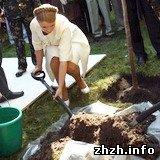 Экономика: На Житомирщине люди боятся зайти в лес, в котором Тимошенко посадила дерево. ФОТО