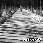 Происшествия: В Житомирской области, отпраздновав Новый год, мужчина заблудился в лесу