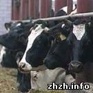 Криминал: Двое мужчин украли на ферме корову и перевозили её в салоне автомобиля. ФОТО