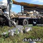 Происшествия: Под Житомиром мародеры ограбили опрокинувшийся грузовик с пивом. ФОТО
