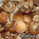 Происшествия: В Житомирской области 3-летняя девочка находится в коме после отравления грибами