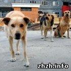 Житомир: В Житомире неизвестные люди массово травят бродячих собак