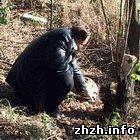 Происшествия: В Житомирской области школьники нашли снаряд и две мины времен ВОВ. ФОТО