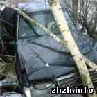 Происшествия: Под Бердичевом проведен эксперимент: Mercedes не едет через деревья. ФОТО