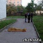 Происшествия: В Житомирской области погиб мужчина, выпав из окна седьмого этажа. ФОТО