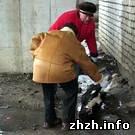 На рынке зверски убиты пять местных собак. ФОТО не для слабонервных