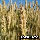 Экономика: Компания Укрлендферминг купит три житомирских агропредприятия