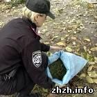 В Житомире задержан 26-летний рецидивист с мешком конопли. ФОТО