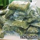 Житомирская милиция изъяла из незаконного оборота 400 кг марихуаны