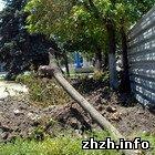 Будівельники комплексу «Глобал.UA» знищують дерева і клумби. ФОТО