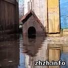 Происшествия: Под Коростенем оказались затоплены многие дома и огороды. ФОТО