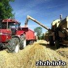Житомирська область в 2008 році планує зібрати 670 тис. тонн зернових