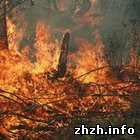 В Житомирской области горит Полесский природный заповедник