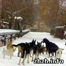 Стая бродячих собак в Житомире покусала 9-летнего школьника