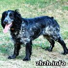 В Бердичеве неизвестный застрелил домашнюю собаку из пневматической винтовки