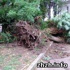 Происшествия: В Житомире ураган повалил деревья и оставил горожан без света