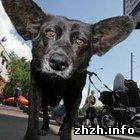 Общество: В Бердичеве открыли приют для бездомных собак