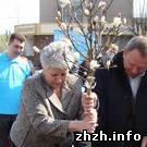 Житомир: В Житомире появилась аллея магнолий. ФОТО