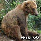 От Малинского медведя отказался зоопарк. Охотники продолжают тренировать на нем собак. ФОТО