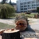 Житомир: В Житомире на Новом бульваре срезали полувековые деревья. ФОТО