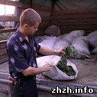 Криминал: Под Житомиром задержан водитель ГАЗели перевозивший в кузове марихуану. ФОТО