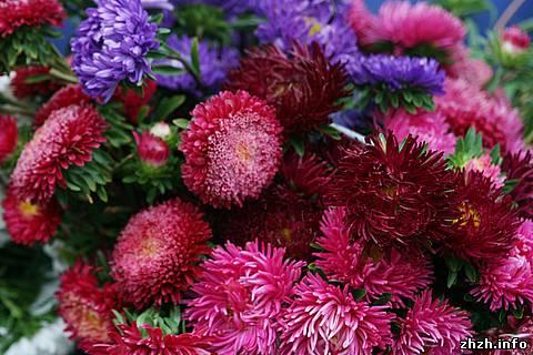 цветы в Житомире
