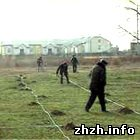 Экономика: Житомирская область перевыполнила план по посадке леса - Лесхоз