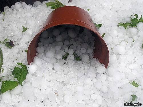 Крупный град в Любаре побил стекла, местных жителей и уничтожил урожай