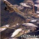 Криминал: В Житомирской области неизвестные отравили рыбу химическим веществом. ФОТО