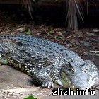 Экономика: Николай Барвинский разводит крокодилов на ферме под Житомиром