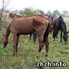 Криминал: Суд вынес приговор предпринимателю морившего голодом племенных лошадей
