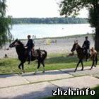 Общество: Житомирская конная милиция ищет спонсора