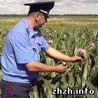 Житомирська міліція знищує незаконні посіви маку. ФОТО