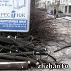Житомир: Зеленстрой подрезает кроны деревьев на центральных улицах Житомира. ФОТО