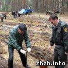 В Новоград-Волынском высажено почти 3,5 тысяч саженцев красного дуба. ФОТО