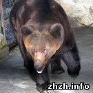 Житомирский медведь-нелегал уехал в Ялту. ФОТО