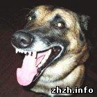 Пивоварова опровергла информацию об отстреле бродячих собак в Житомире