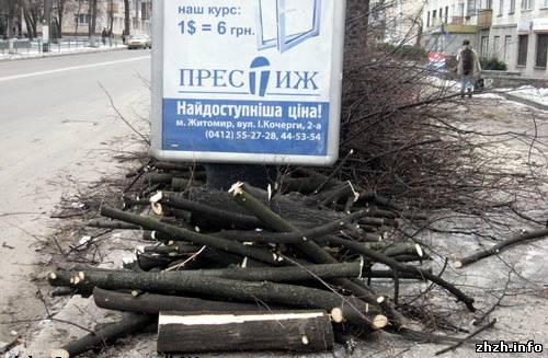 Зеленстрой подрезает кроны деревьев на центральных улицах Житомира
