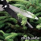 Экономика: Предприятия Житомирского лесхоза перевыполнили планы реализации новогодних елок