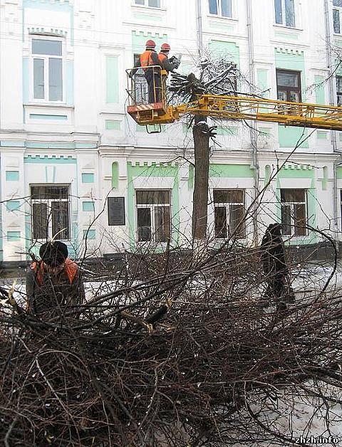 «Зеленстрой» продолжил кронировать деревья в Житомире. ФОТО